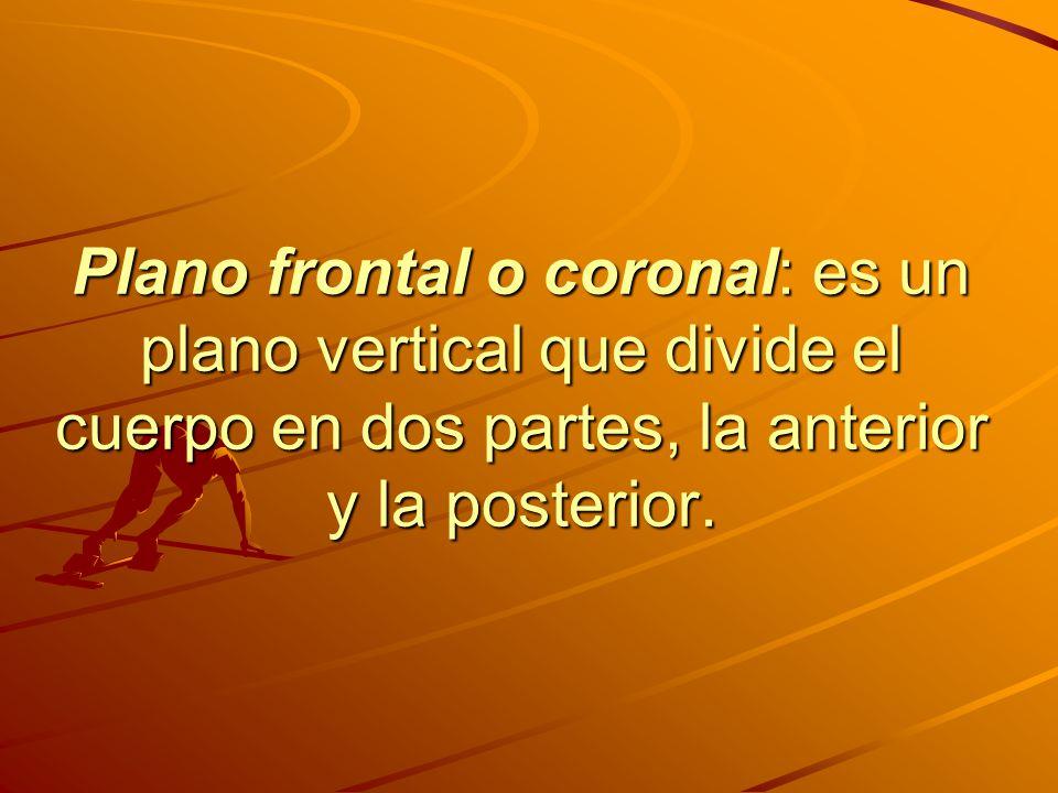 Plano frontal o coronal: es un plano vertical que divide el cuerpo en dos partes, la anterior y la posterior.