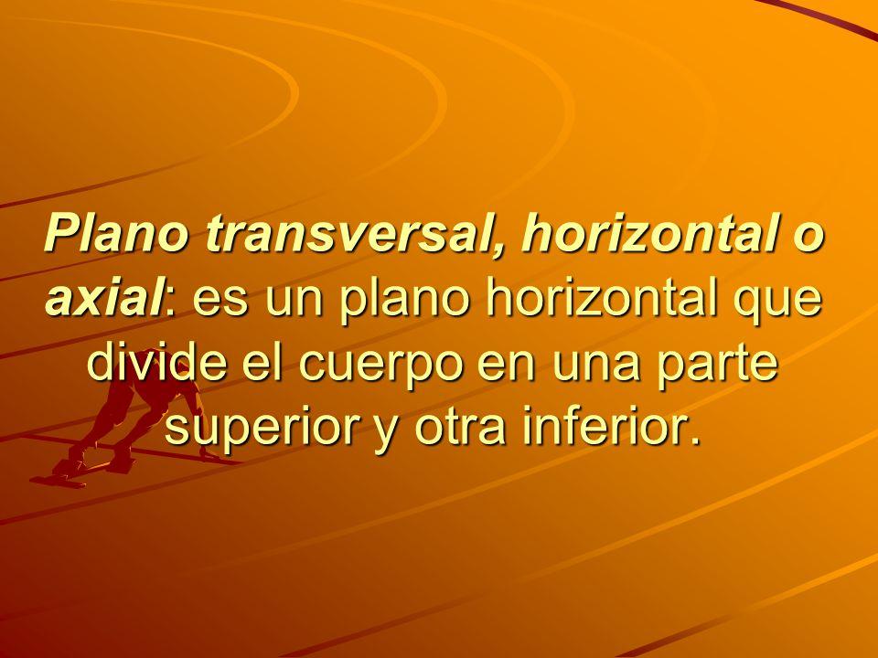 Plano transversal, horizontal o axial: es un plano horizontal que divide el cuerpo en una parte superior y otra inferior.