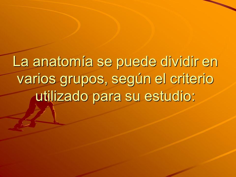 La anatomía se puede dividir en varios grupos, según el criterio utilizado para su estudio: