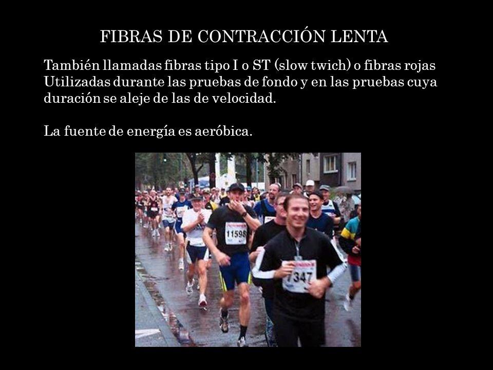 FIBRAS DE CONTRACCIÓN LENTA