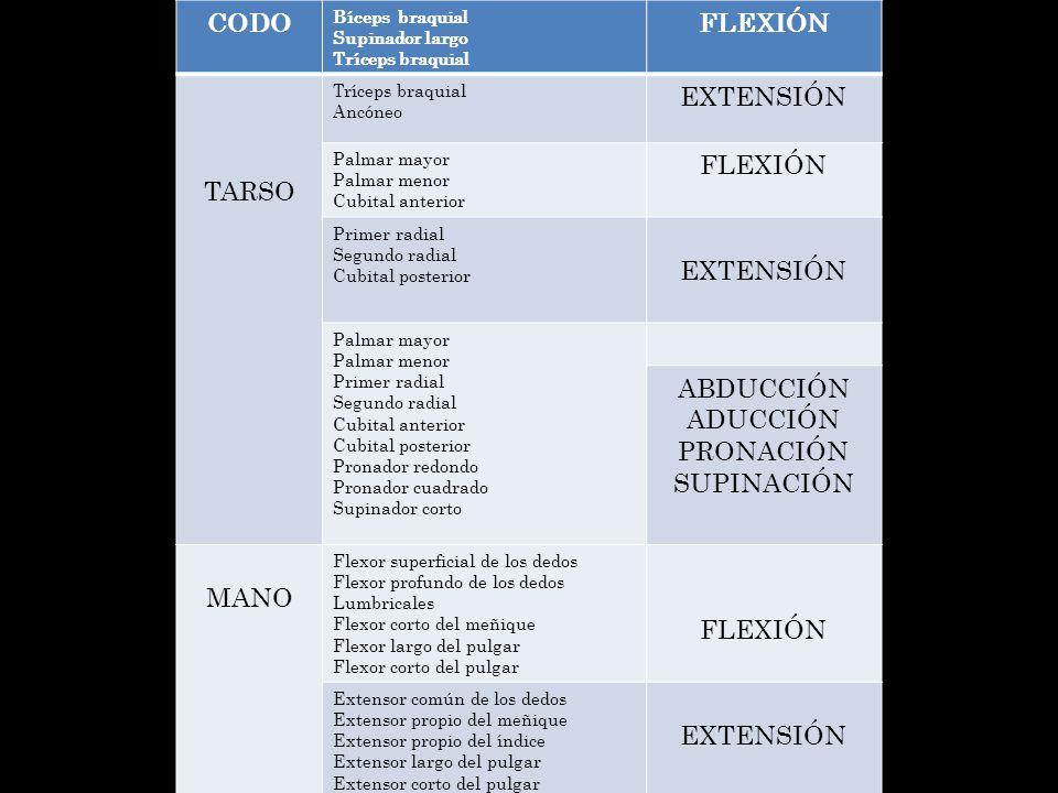 CODO FLEXIÓN TARSO EXTENSIÓN ABDUCCIÓN ADUCCIÓN PRONACIÓN SUPINACIÓN