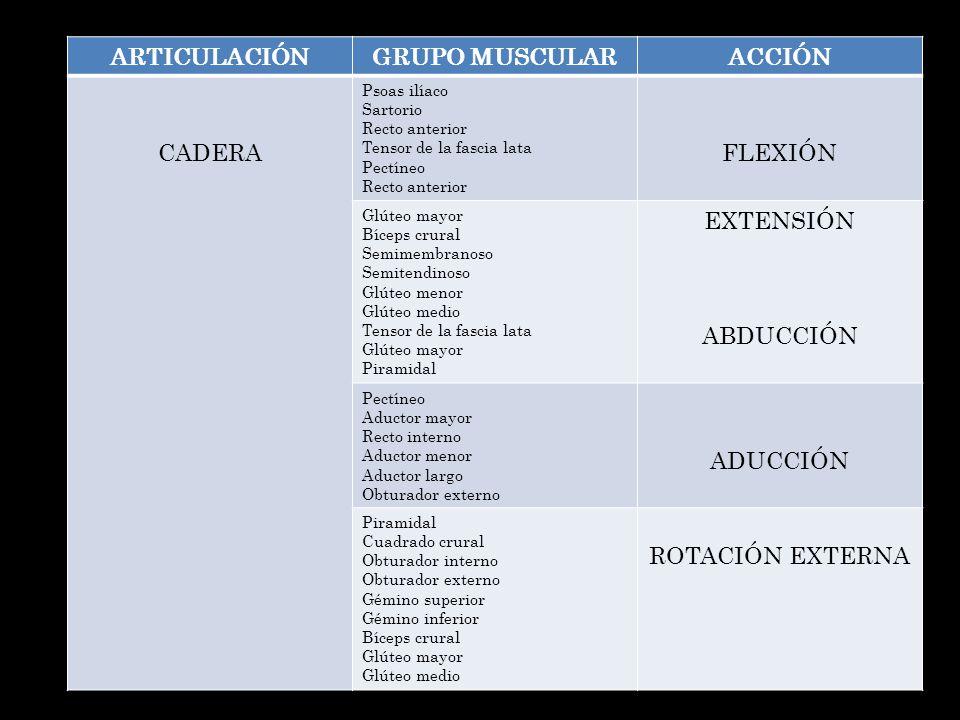 ARTICULACIÓN GRUPO MUSCULAR ACCIÓN