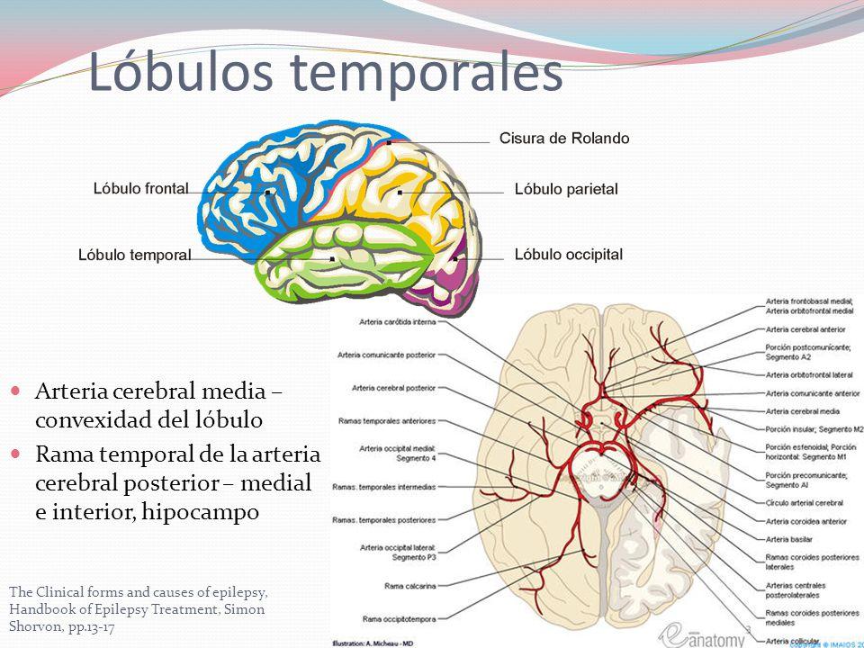 Contemporáneo Anatomía Del Lóbulo Temporal Adorno - Imágenes de ...