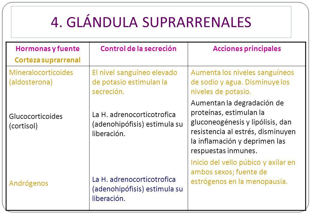 Perfecto Hormonas Producidas Por Las Glándulas Suprarrenales ...