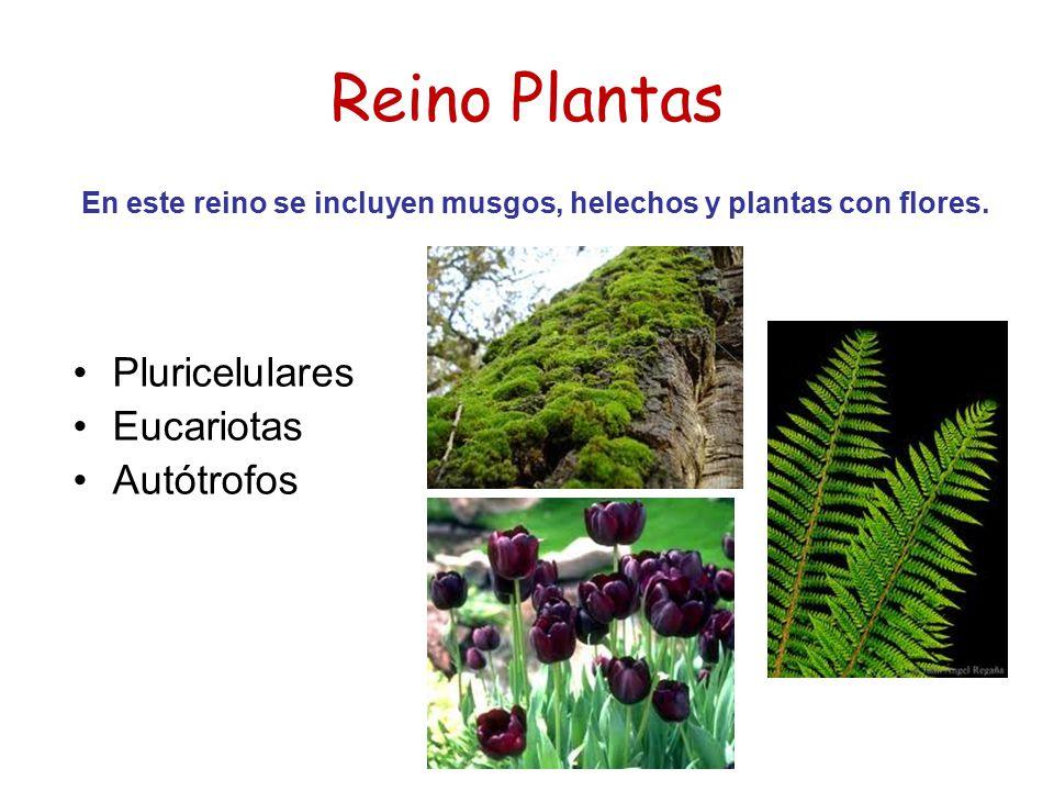En este reino se incluyen musgos, helechos y plantas con flores.