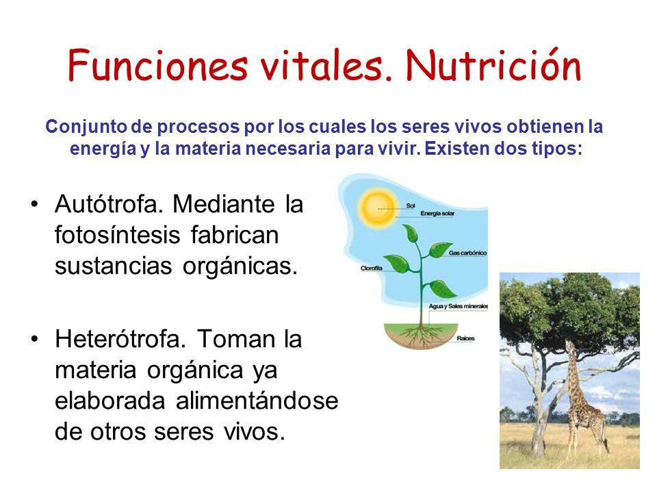 Funciones vitales. Nutrición