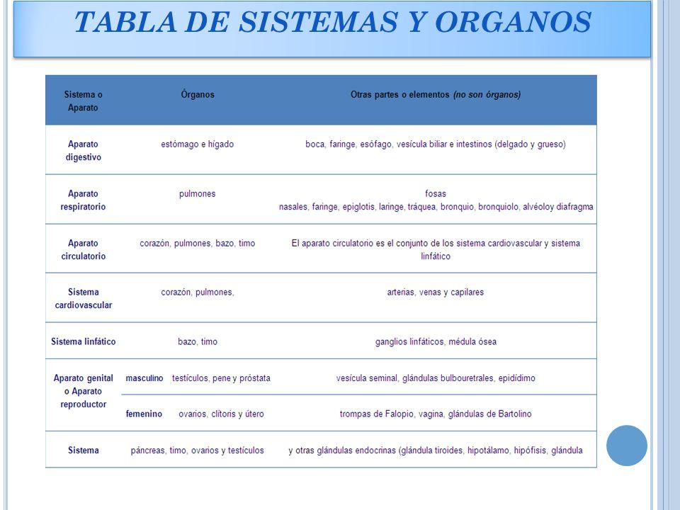 Excepcional órganos Tabla De La Anatomía Componente - Anatomía de ...