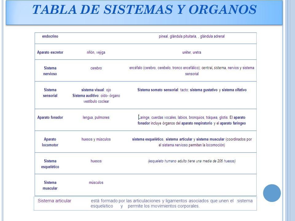 Bonito órganos Tabla De Anatomía Humana Embellecimiento - Anatomía ...