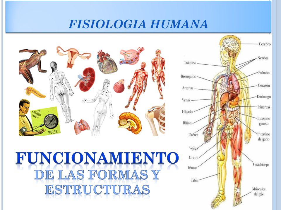 Bonito La Forma De Estudiar La Anatomía Y Fisiología Humana ...