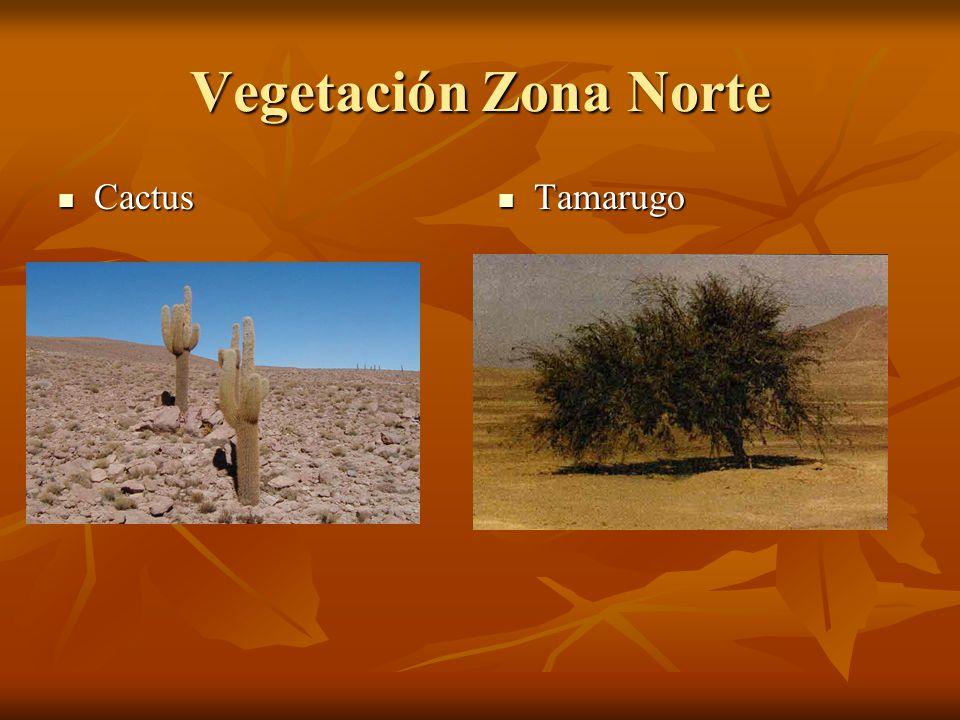 Zonas De Chile Ppt Video Online Descargar