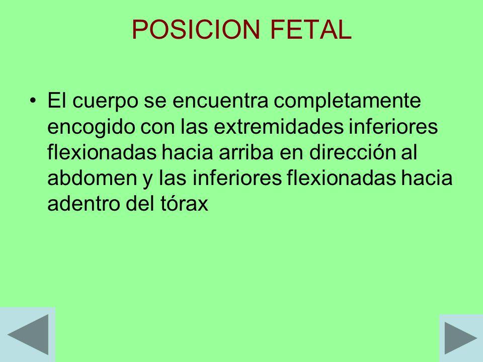 POSICION FETAL