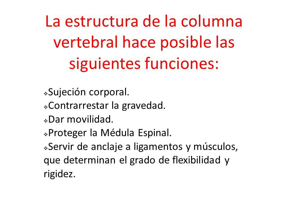 La estructura de la columna vertebral hace posible las siguientes funciones:
