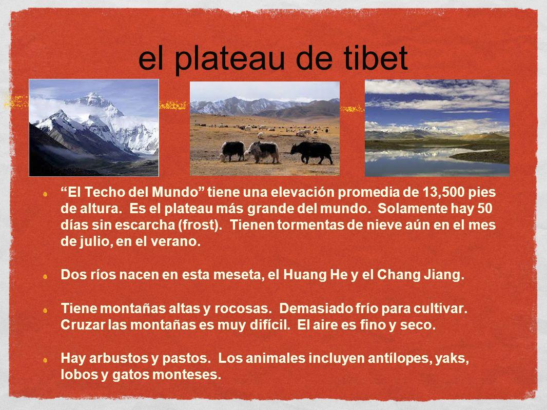 el plateau de tibet