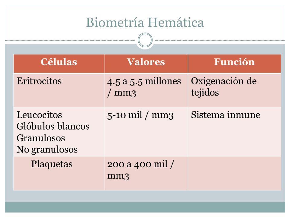 Biometría Hemática Células Valores Función Eritrocitos