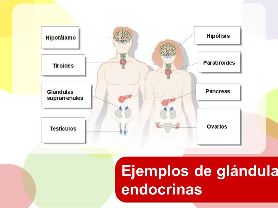 Ejemplos de glándulas endocrinas