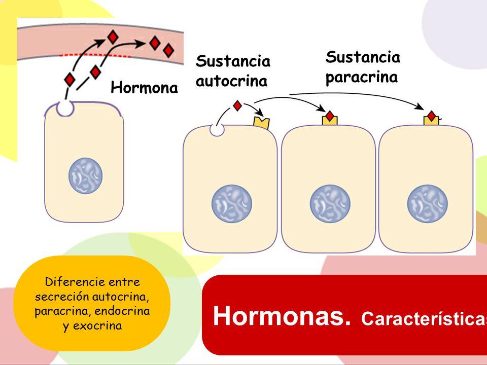 Diferencie entre secreción autocrina, paracrina, endocrina y exocrina
