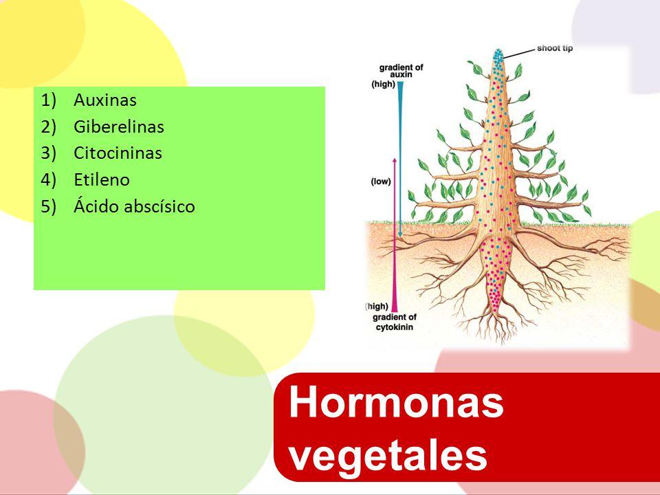 Hormonas vegetales Auxinas Giberelinas Citocininas Etileno