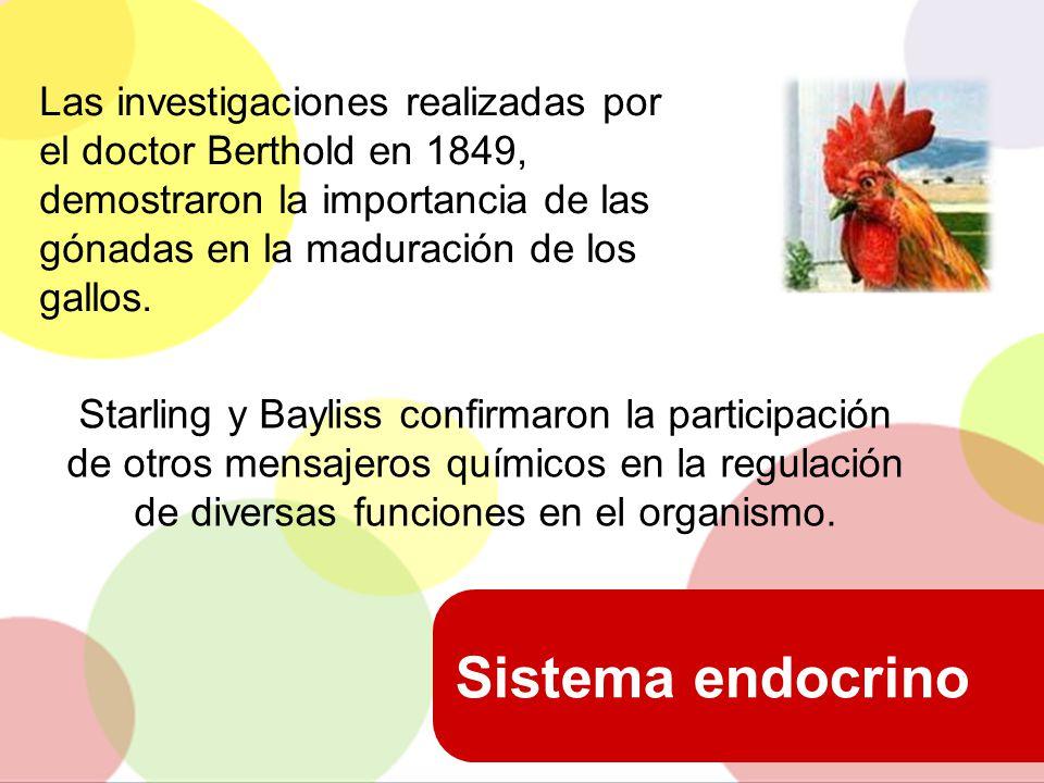 Las investigaciones realizadas por el doctor Berthold en 1849, demostraron la importancia de las gónadas en la maduración de los gallos.