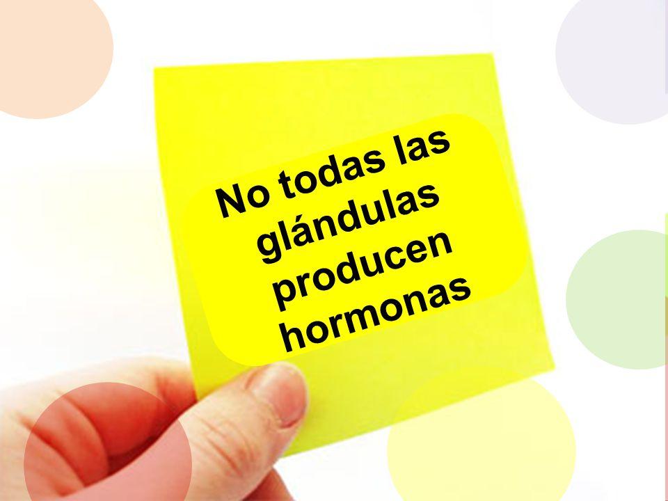 No todas las glándulas producen hormonas