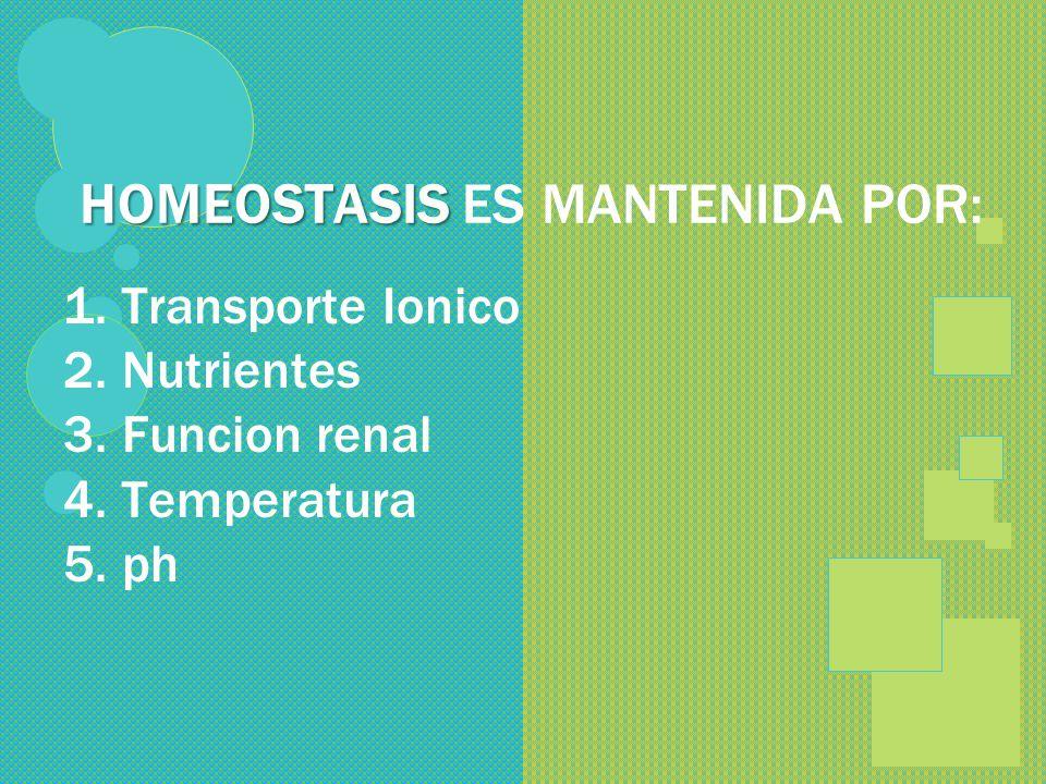 HOMEOSTASIS ES MANTENIDA POR: