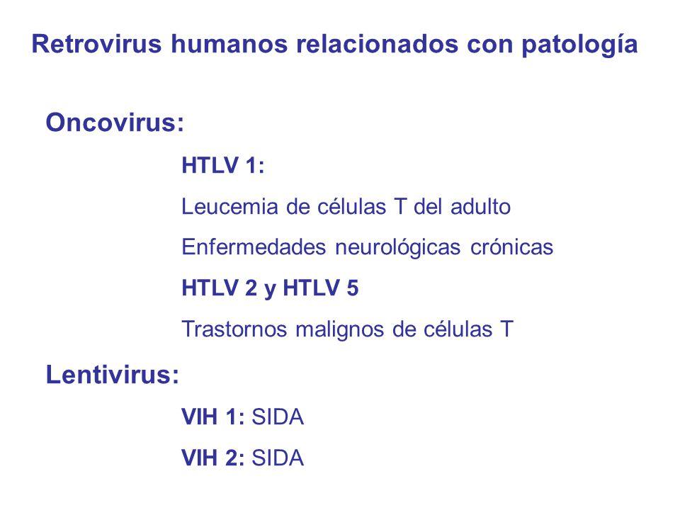 Retrovirus humanos relacionados con patología
