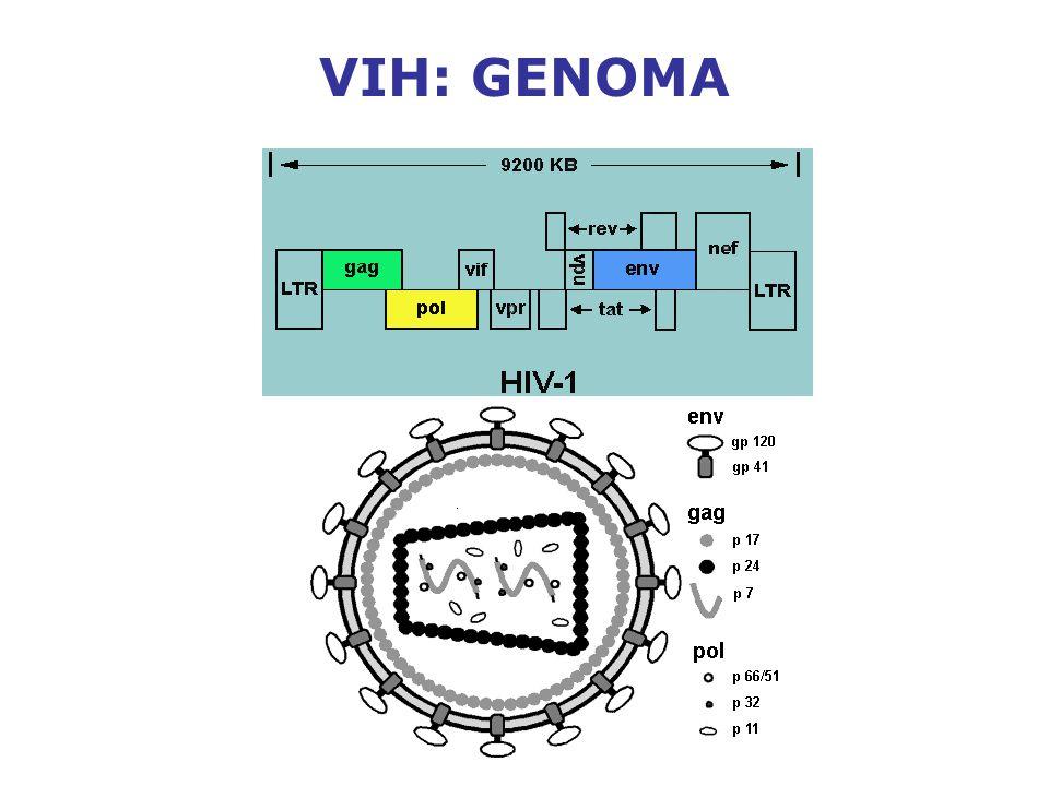 VIH: GENOMA