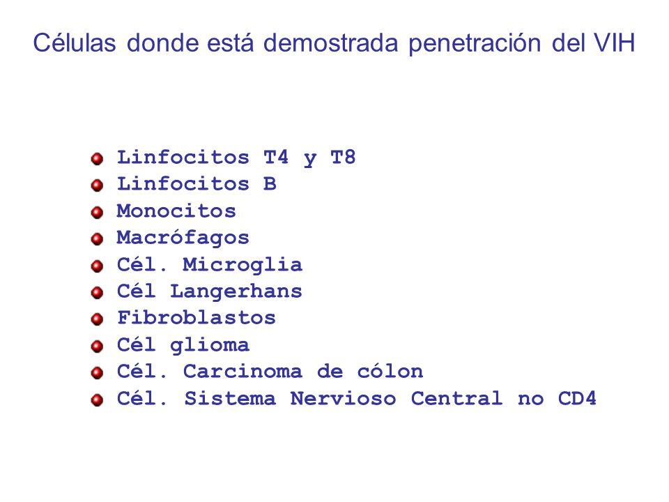 Células donde está demostrada penetración del VIH