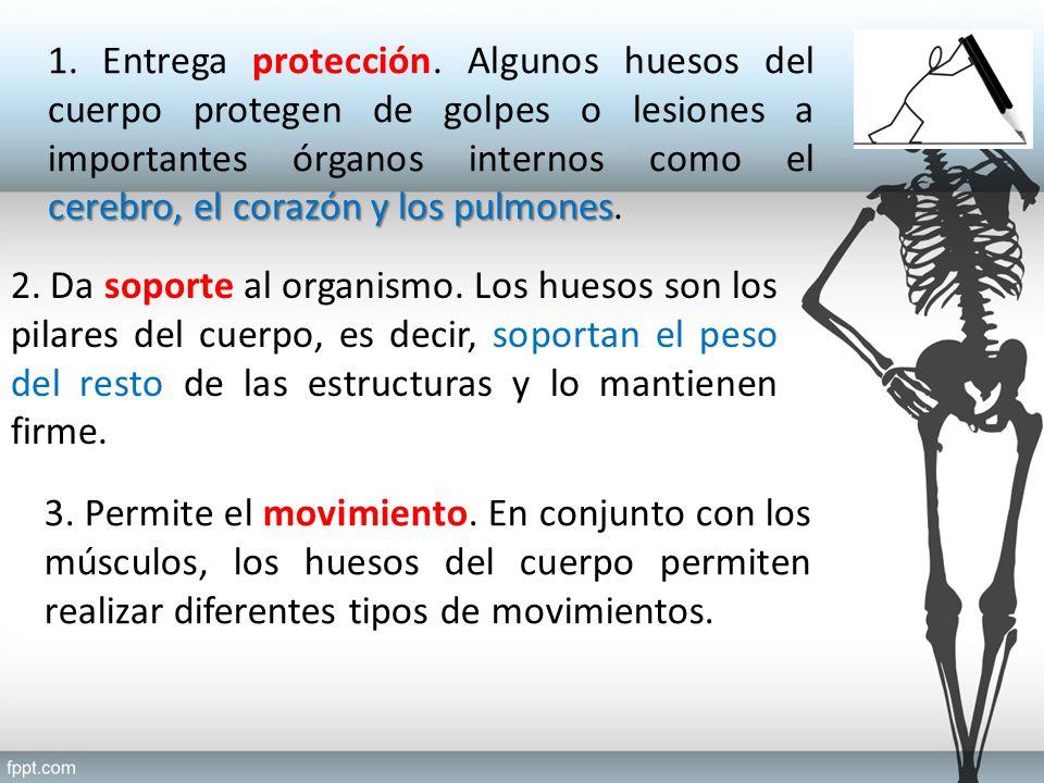 Objetivo: Identificar y describir las estructuras y funciones del ...