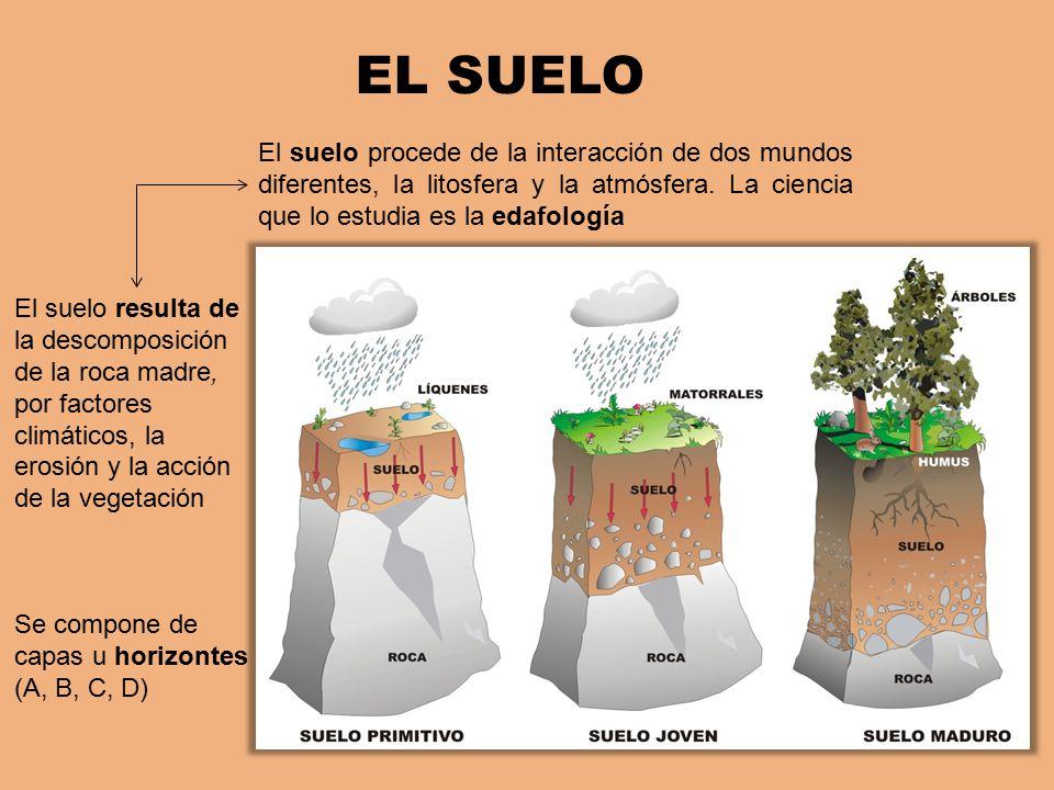 Tipo de vegetaci n seg n su tama o y fisonom a bosque for Hipotecas afectadas por el suelo
