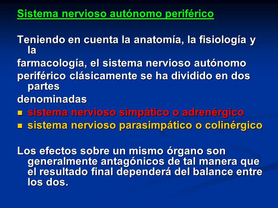Magnífico Anatomía Del Sistema Nervioso Autónomo Embellecimiento ...