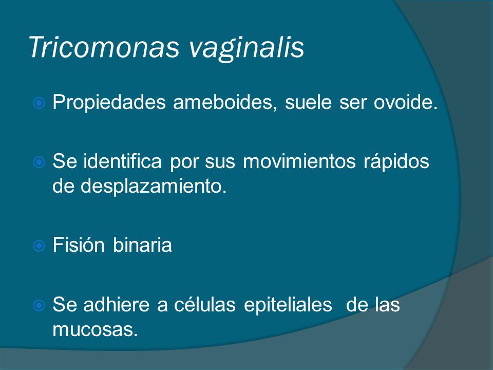 Tricomonas vaginalis Propiedades ameboides, suele ser ovoide.