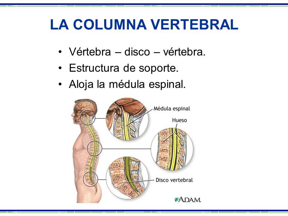 LA COLUMNA VERTEBRAL Vértebra – disco – vértebra.