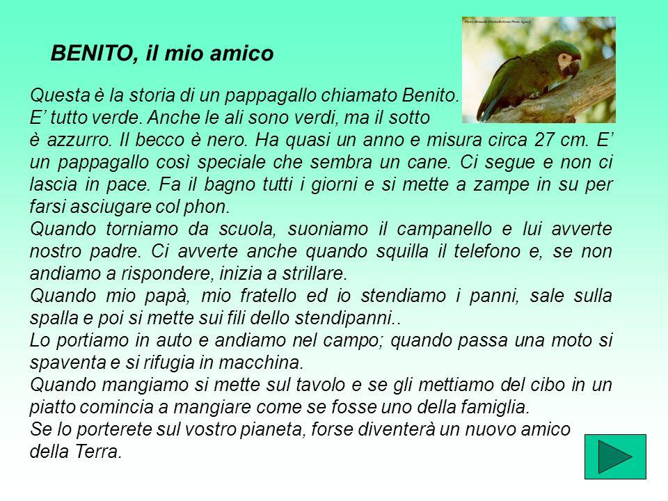 Questa è la storia di un pappagallo chiamato Benito.