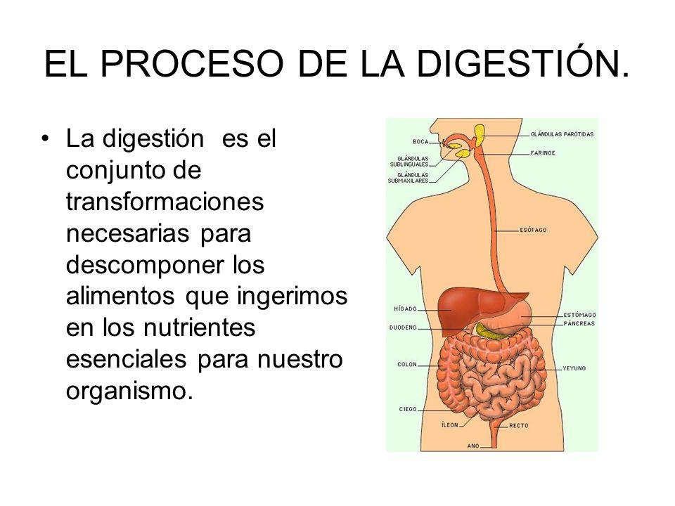 EL PROCESO DE LA DIGESTIÓN.