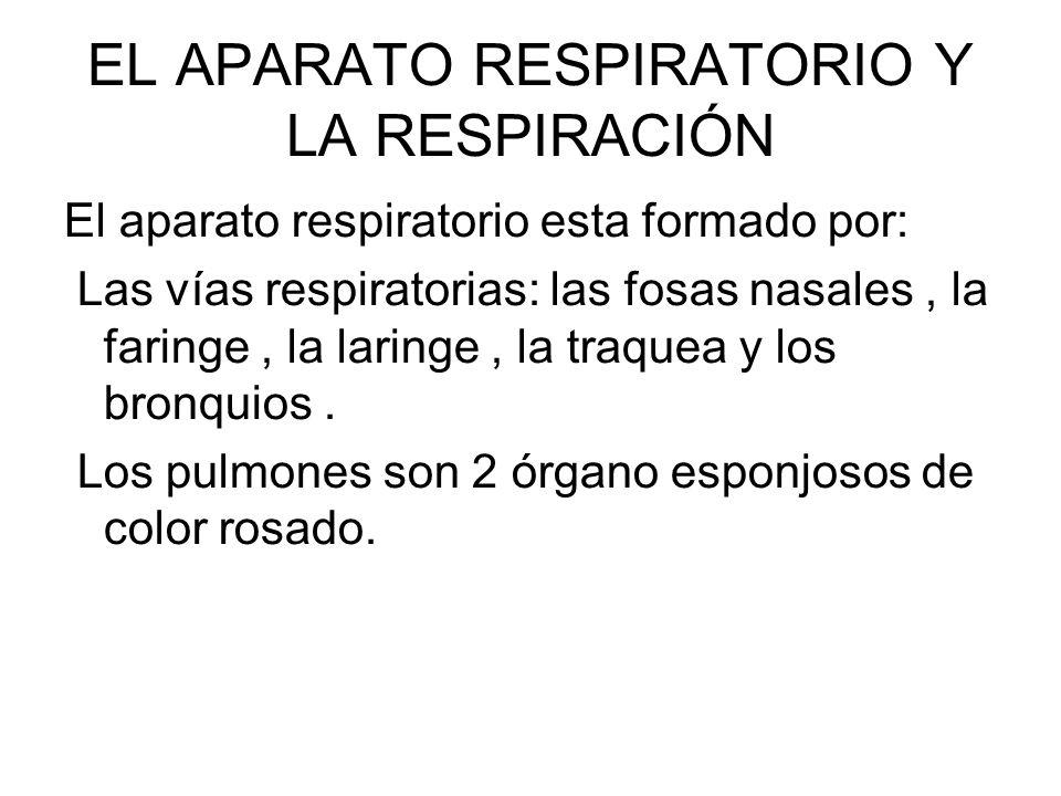 EL APARATO RESPIRATORIO Y LA RESPIRACIÓN