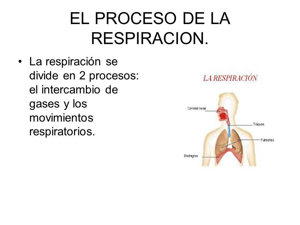 EL PROCESO DE LA RESPIRACION.