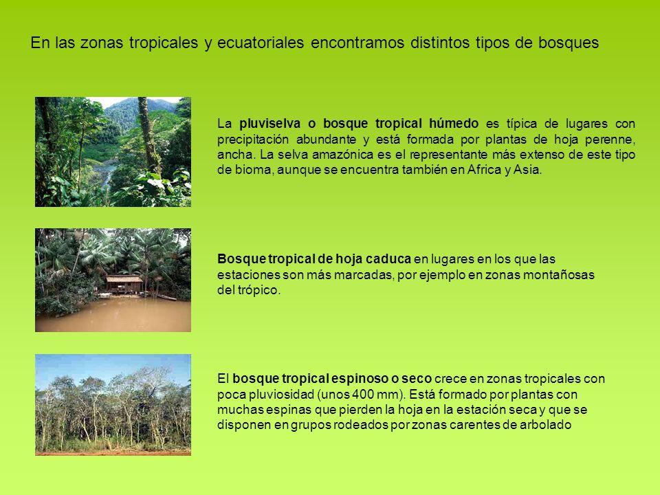 organizaci n y diversidad de la biosfera ppt descargar