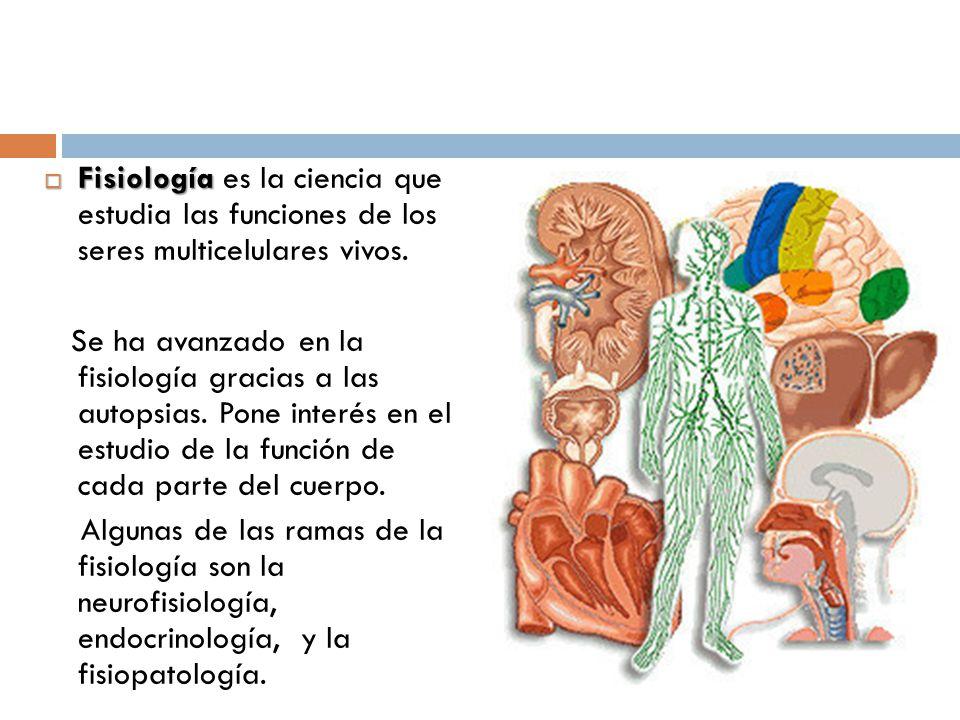 Fantástico Por Qué Estudiamos La Anatomía Y Fisiología Bosquejo ...