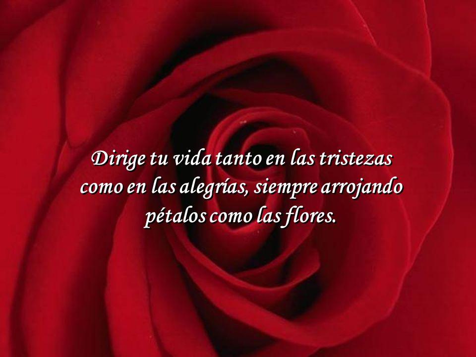 Dirige tu vida tanto en las tristezas como en las alegrías, siempre arrojando pétalos como las flores.
