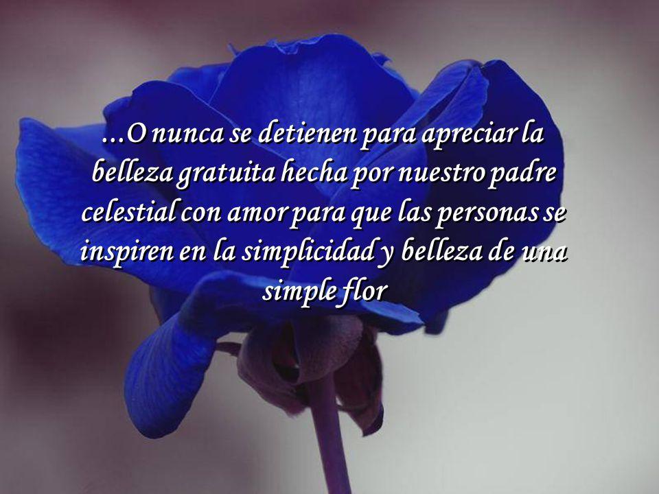...O nunca se detienen para apreciar la belleza gratuita hecha por nuestro padre celestial con amor para que las personas se inspiren en la simplicidad y belleza de una simple flor