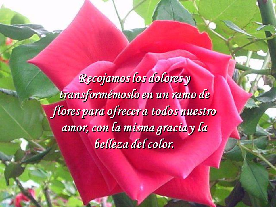 Recojamos los dolores y transformémoslo en un ramo de flores para ofrecer a todos nuestro amor, con la misma gracia y la belleza del color.