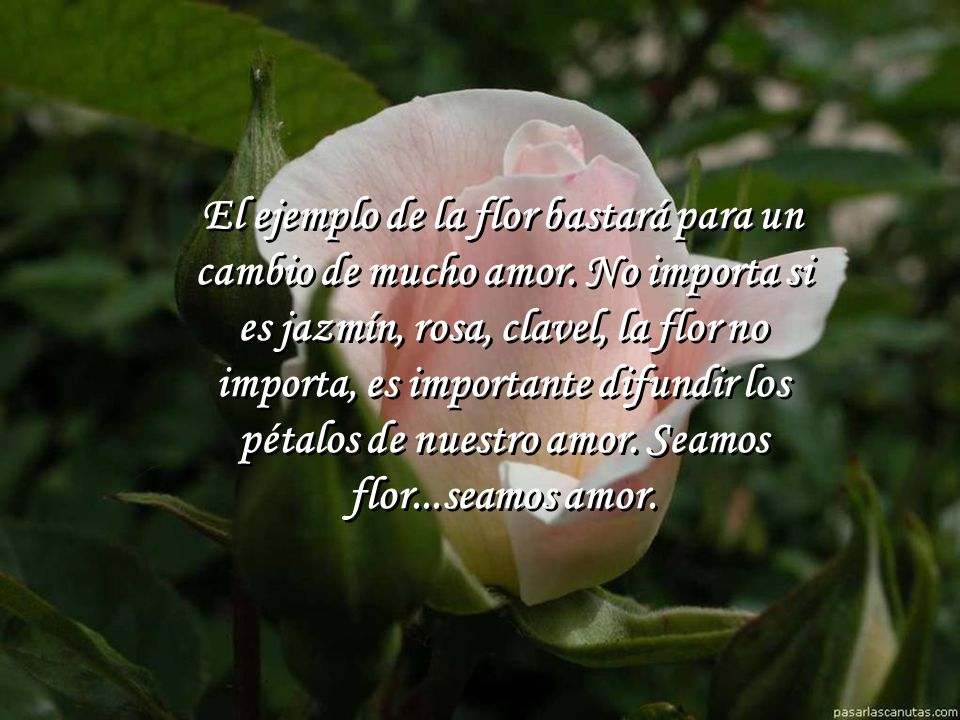 El ejemplo de la flor bastará para un cambio de mucho amor