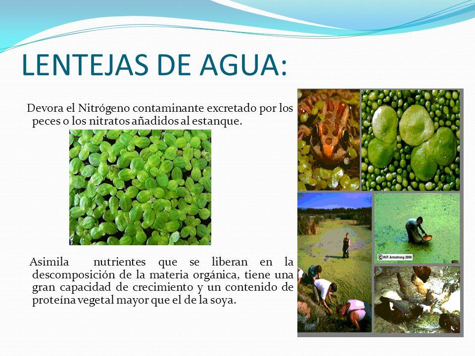 Filtros por mar a jos garc a mar a fernanda otero mar a for Peces de agua fria para consumo humano