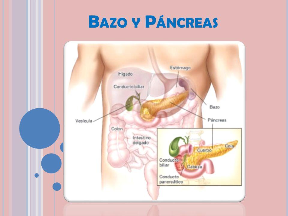 Bazo y Páncreas. - ppt descargar