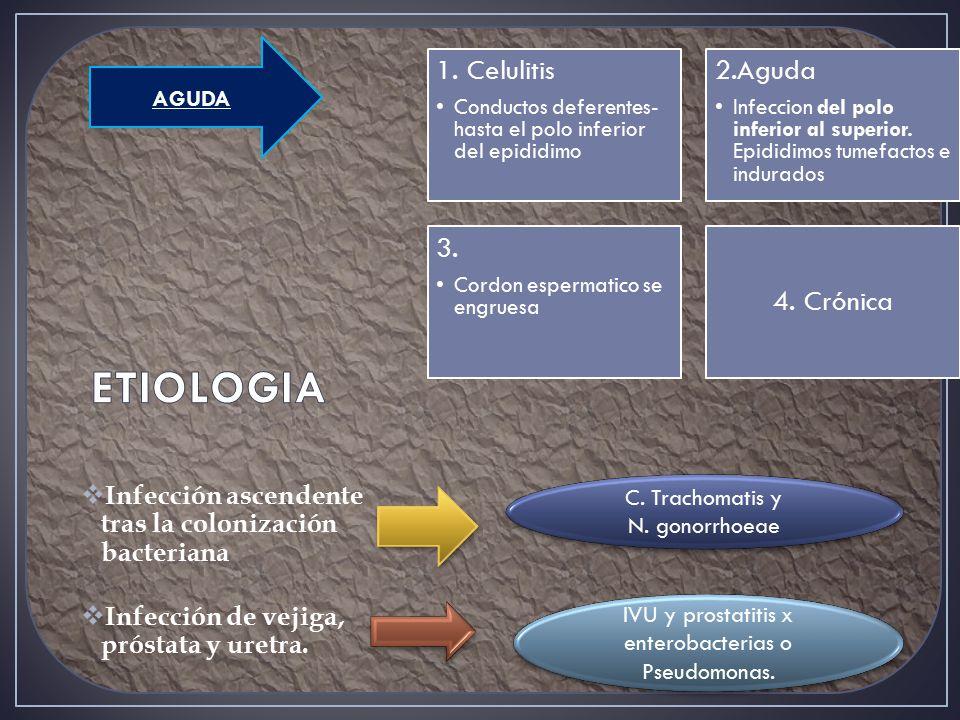 ETIOLOGIA 1. Celulitis 2.Aguda 3. 4. Crónica