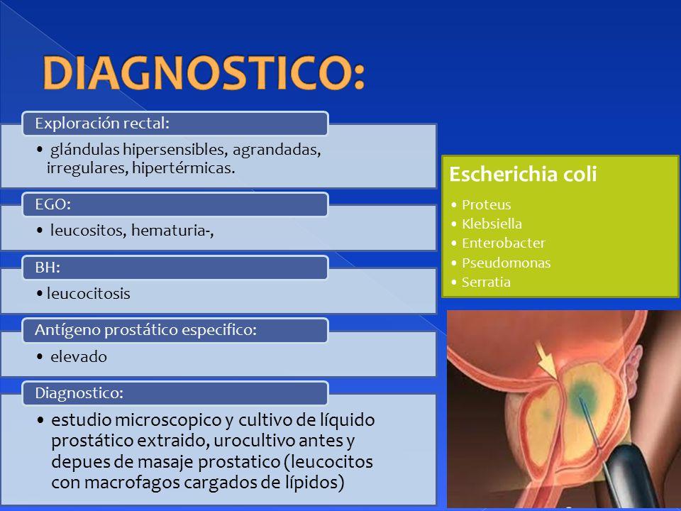 DIAGNOSTICO: Escherichia coli