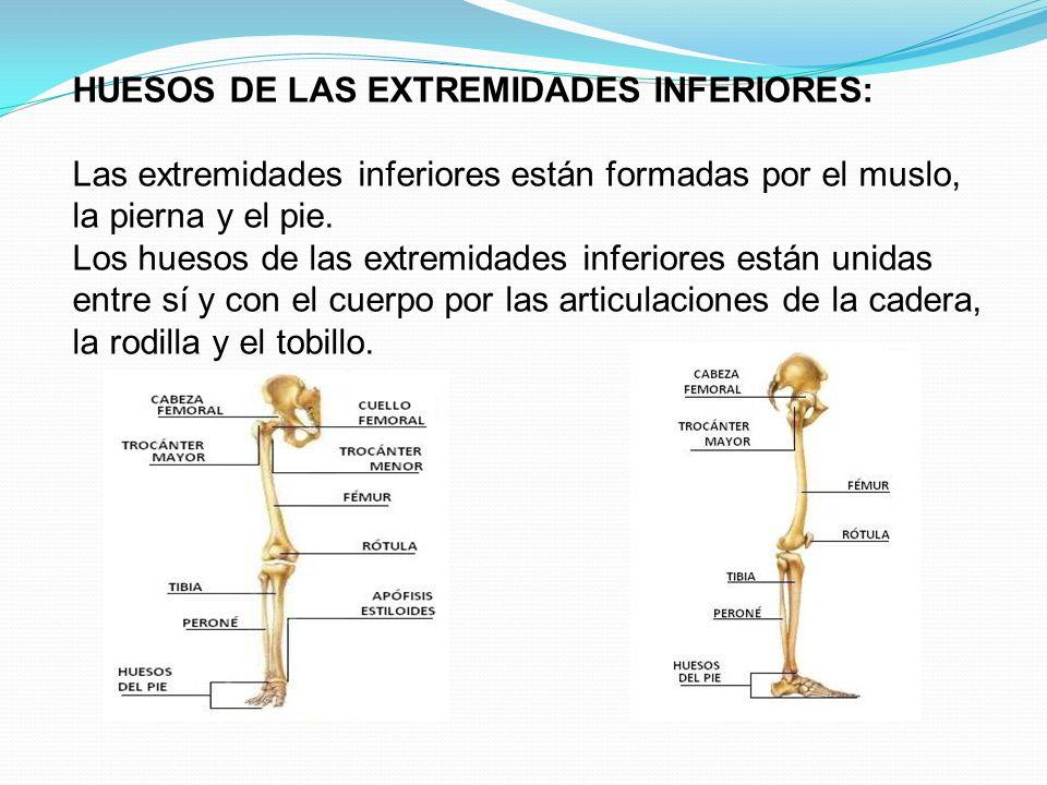 HUESOS DE LAS EXTREMIDADES INFERIORES: