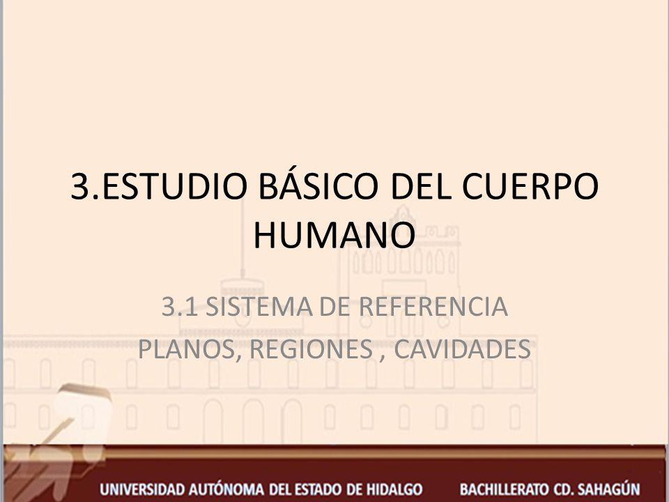 3.ESTUDIO BÁSICO DEL CUERPO HUMANO