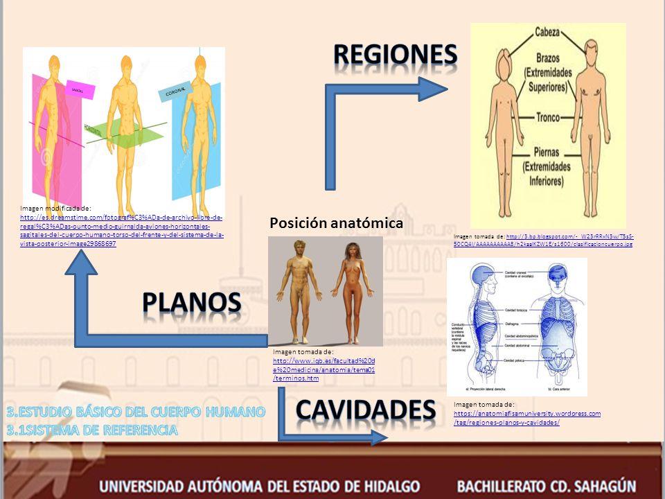 Regiones Planos Cavidades Posición anatómica