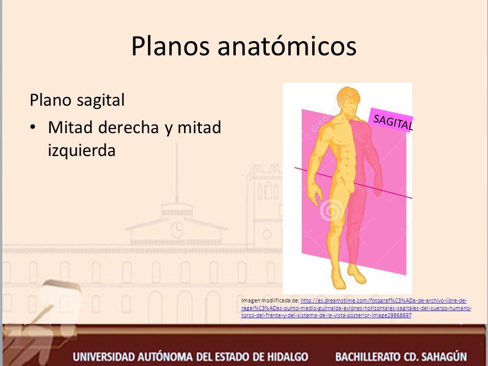 Planos anatómicos Plano sagital Mitad derecha y mitad izquierda
